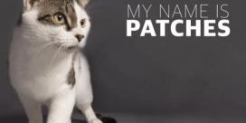 SPCA Pet of the Week is Patches