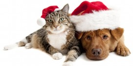 Saint John SPCA Animal Rescue Holiday Wish List