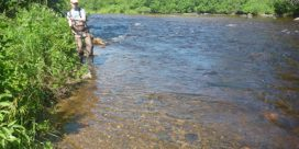 Miramichi Fishing Report for Thursday, June 22, 2017