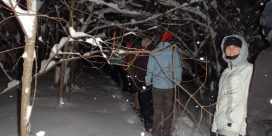 Moonlight Snowshoe Hike with Elmhurst Outdoors
