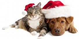 Saint John SPCA Animal Rescue Holiday Wish List