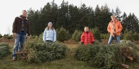 Minister promotes locally grown Christmas trees